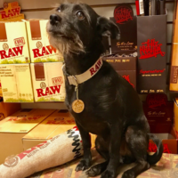 RAW Hemp Pet Collar